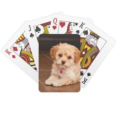 Baby Maltese poodle mix or maltipoo puppy dog Playing Cards - diy cyo personalize design idea new special custom