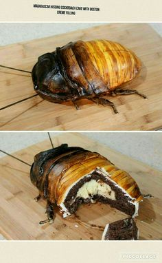 Madagascar Hissing Cockroach Cake with Boston Creme Filling. I don't fucking think so.