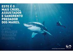 CCSP: Tubarão Branco