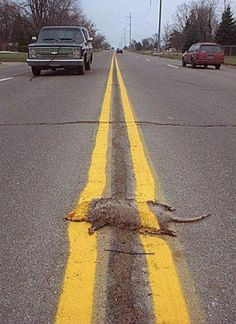 Now that's road kill.