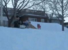 Funny dog at snow