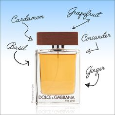 Read our blog on Dolce and Gabbana The One cologne for men. This fragrance is a total must-have. Wedding Trends, Cologne, The One, Perfume Bottles, Fragrance, Hairstyles, Rose, Blog, Men
