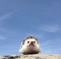 Adorable Traveling Hedgehog Explores the Great Outdoors - My Modern Met
