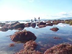 Plenty to find in these rock pools. Shell Island, Rock Pools, Water, Outdoor, Water Water, Outdoors, Outdoor Games, The Great Outdoors, Natural Swimming Pools
