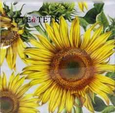 These are paper cocktail napkins, 5 x 5 folded and 10 x 10 unfolded. They are great to use for decoupage, scrapbooking, mixed media and other art and craft projects. You will receive two paper cocktail napkins. Decorative Paper Napkins, Paper Napkins For Decoupage, Sunflower Flower, Yellow Sunflower, Paper Serviettes, Photo Direct, Big Yellow, Spring Design, Glass Candle Holders