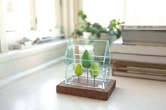 Miniature greenhouse structure - small acrylics architecture around green trees - glass house -look solarium door op Etsy