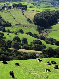 """God's own county"", near Elland, UK by gedtee, via Flickr"