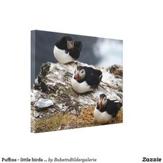 Puffins - little birds big leinwanddruck Little Birds, Big, Painting, Animals, Vacation Pictures, Animal Themes, Artworks, Canvas, Animales
