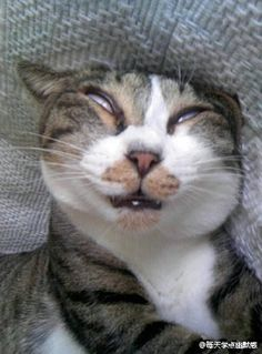 #Sleeping cat #cat #kitty #猫部#ネコ#子猫