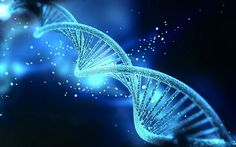 Only percent of human DNA is function, according to a new study. These findings suggest that majority of the human genome is so-called junk DNA. Human Dna, Human Genome, Human Embryo, Human Body, Art Adn, Dna Kunst, Dna Model Project, Kaleidoscope Art, Dna Art
