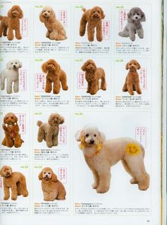 In this article, we will be discussing Goldendoodle grooming. We will outline the most important steps on how to groom a Goldendoodle, and we will even touch a little bit on Goldendoodle grooming styles. Mini Goldendoodle, Standard Goldendoodle, Goldendoodle Haircuts, Dog Haircuts, Maltipoo, Cockapoo Haircut, Goldendoodle Grooming, Poodle Grooming, Dog Grooming Styles