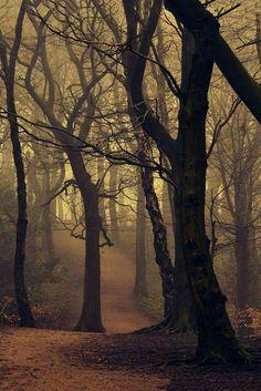 Dark Fey Fantasy Landscapes . . Hwyndarin pear Grove in autumn