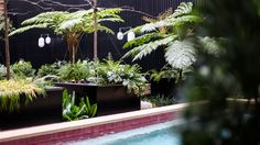 Valverde Hotel #exteriordesign #decoration #bastir #garden #pool #decorating #ideas #decor #green #exterior Boutique, Old Things, Plants, Travel, Lisbon, Voyage, Flora, Viajes, Plant