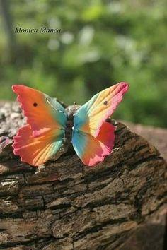 Mariposa de colores arco iris | Rainbow butterfly