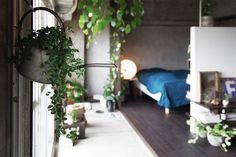 深みのあるシックな部屋も、グリーンのおかげで親しみやすい雰囲気になっていますね。