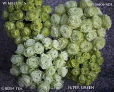 Comparison of the top four green roses--Wimbeldon, Lemonade, Green Tea and Super Green