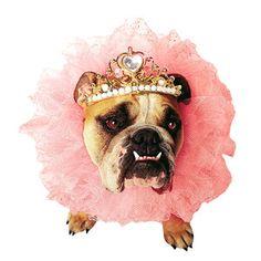 (3) eu.Fab.com | Aberwitzige Hundekostüme