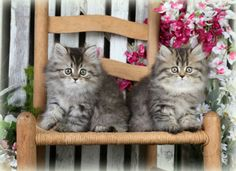 """""""No heaven will not ever Heaven be / Unless my cats are there to welcome me."""" ― Author Unknown [pinned by PartyTalent.com]"""