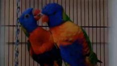 Funny Birds, Cute Funny Animals, Bird Food, Bollywood Girls, Bird Feathers, Butterflies, Pets, Gallery, Beauty