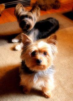 Barnaby & Oliver   Flickr: Intercambio de fotos