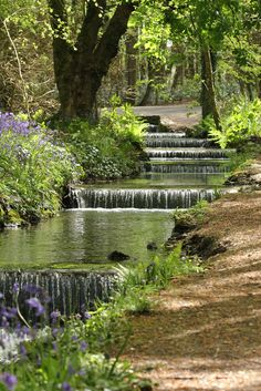 Bluebells at Tehidy Woods, #Cornwall #bluebells https://www.pinterest.com/sowildandfree/