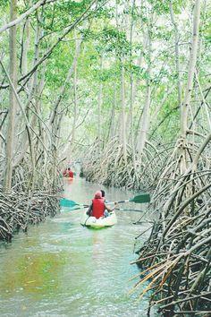 La mangrove de Rivière-Salée. www.josephzobel.com Indian Garden, Windward Islands, Ville France, West Indian, Photos Voyages, Caribbean Sea, Deco, Places To See, Around The Worlds