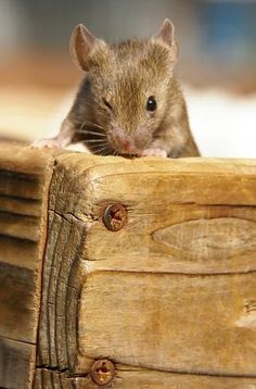 Winking mouse.