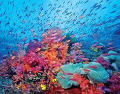 corals and fish - beautiful dive in Mozambique from mood board Malucu Marruma