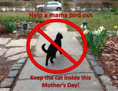 Help a mama bird out! Cats inside this mother's day! #birding