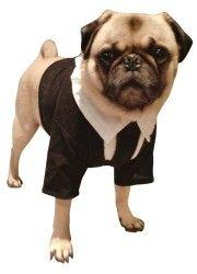Pet Men In Black II Dog Costume For Medium Dogs