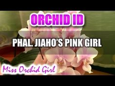 Phalaenopsis Jiaho's Pink Girl - YouTube  I just got this one from Stones River Orchids and I can't wait for the buds to bloom! I hope it smells nice.