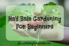 Hay Bale Gardening for Beginners. Have you ever been curious about hay bale gardening? Find out how to get started here!