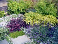 Loropetalum companion plantings