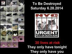 30 CATS/KITTENS are TO BE DESTROYED by NYC ACC Today - June 28'14.  PLEASE NYC!! Step up!! FOSTER * ADOPT * SUPPORT YOUR ANIMALS