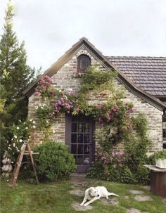 1937 Tudor cottage, covered in a mix of 'Veilchenblau' and 'New Dawn' climbing roses - by Laura Moss:
