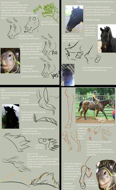Fargo's Tutorial of Many Things by Fargonon on DeviantArt Horse Drawings, Cartoon Drawings, Animal Drawings, Easy Doodles Drawings, Pretty Drawings, Horse Anatomy, Anatomy Art, Horse Drawing Tutorial, Human Drawing