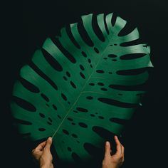 On going personal project of a variety of paper leaves, hand cut and shaped.