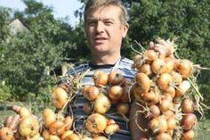 Rețetă pentru cultivarea roșiilor rămasă din bătrâni. Nu ne-a dezamăgit niciodată! - Fasingur Summer House Garden, Planting Potatoes, Thing 1, Small Farm, Farm Gardens, Aquaponics, Vegetable Garden, Pumpkin, Backyard