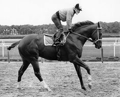 Secretariat on his morning canter with Ron Turcotte