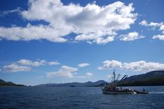 Salmon seining around Kodiak