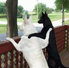 I wish Matt's White German Shepard was still alive....this would be so cute!