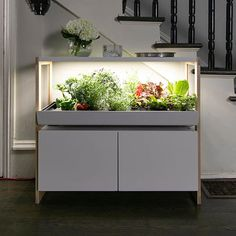Rise Gardens - Smart Hydroponic Gardening - Touch of Modern Indoor Farming, Hydroponic Farming, Indoor Vegetable Gardening, Hydroponic Growing, Hydroponics System, Indoor Hydroponic Gardening, Hydroponic Equipment, Growing Gardens, Fast Growing Plants