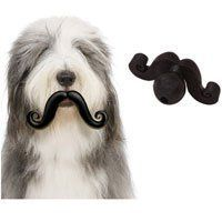 Amazon.com: Mini Humunga Stache Ball Dog Toy: Pet Supplies $14.99