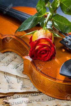 Violín Y Música De La Hoja Rosa Composición Musical Negro Todavía La Vida Fotos, Retratos, Imágenes Y Fotografía De Archivo Libres De Derecho. Image 26231048.