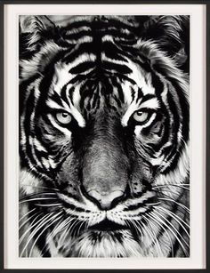 Robert Longo, Print, Untitled (Tiger)