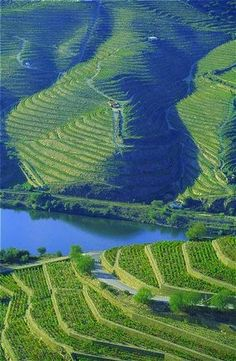 Douro river banks with traditional wineyard crops in Portugal