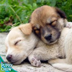 Cute puppy snuggle! Purina® Puppy Chow®