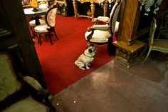 #Mercanteinfiera loves #dogs - #Pug