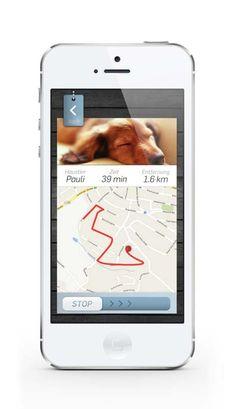 Top 5 Best Dog GPS Collars - Top Dog Tips