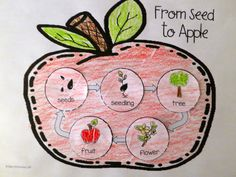 Apples Life Cycle Activity